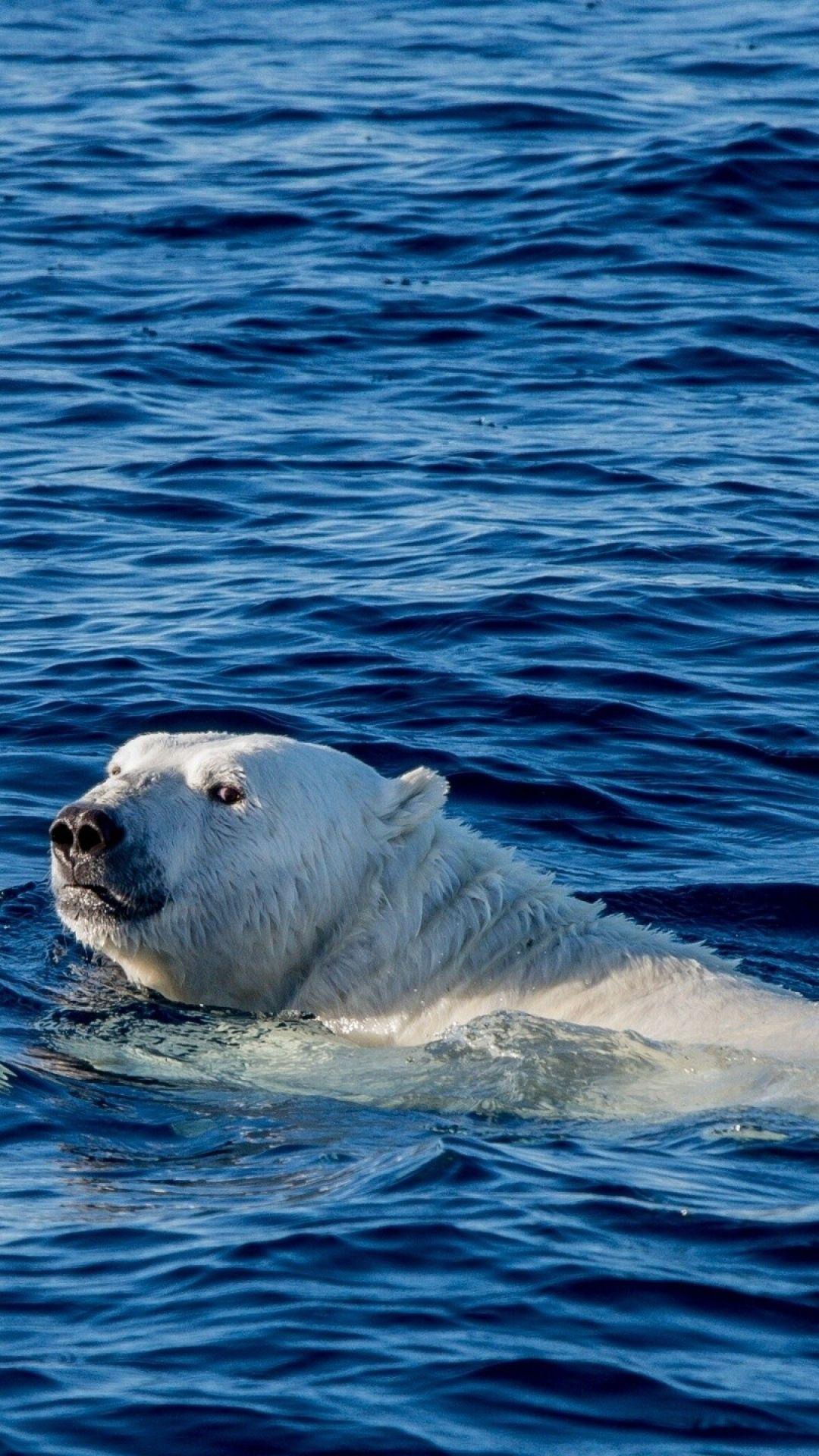 Mq04 Watch Me Swim Polar Bear Sea Animal Polar Bear Animals