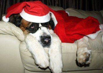 Ho Ho Ho! I don't think!!!!!