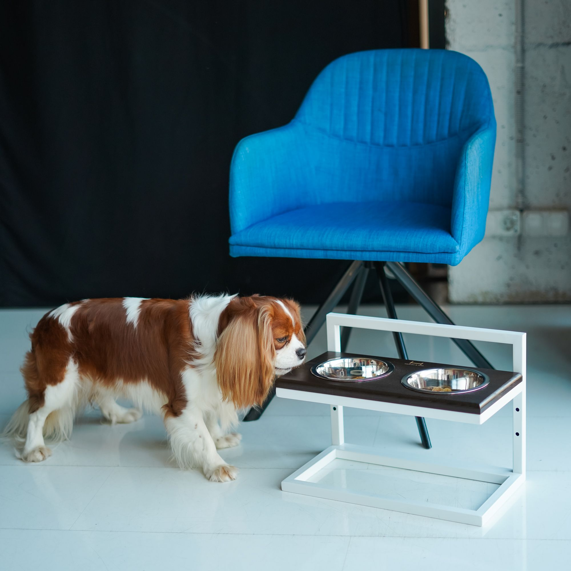 An Elevated Pet Feeder That Grows With Your Pets Pet Feeder Your Pet Dog Feeding Station