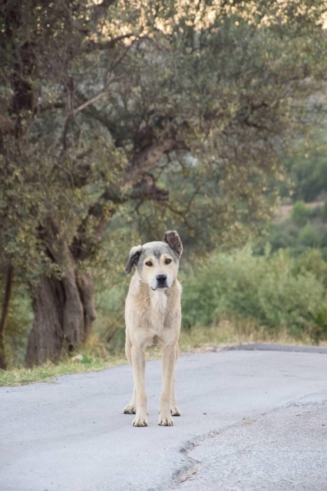 Greek street dog httpsifttt2nrwmxi cute puppies cats