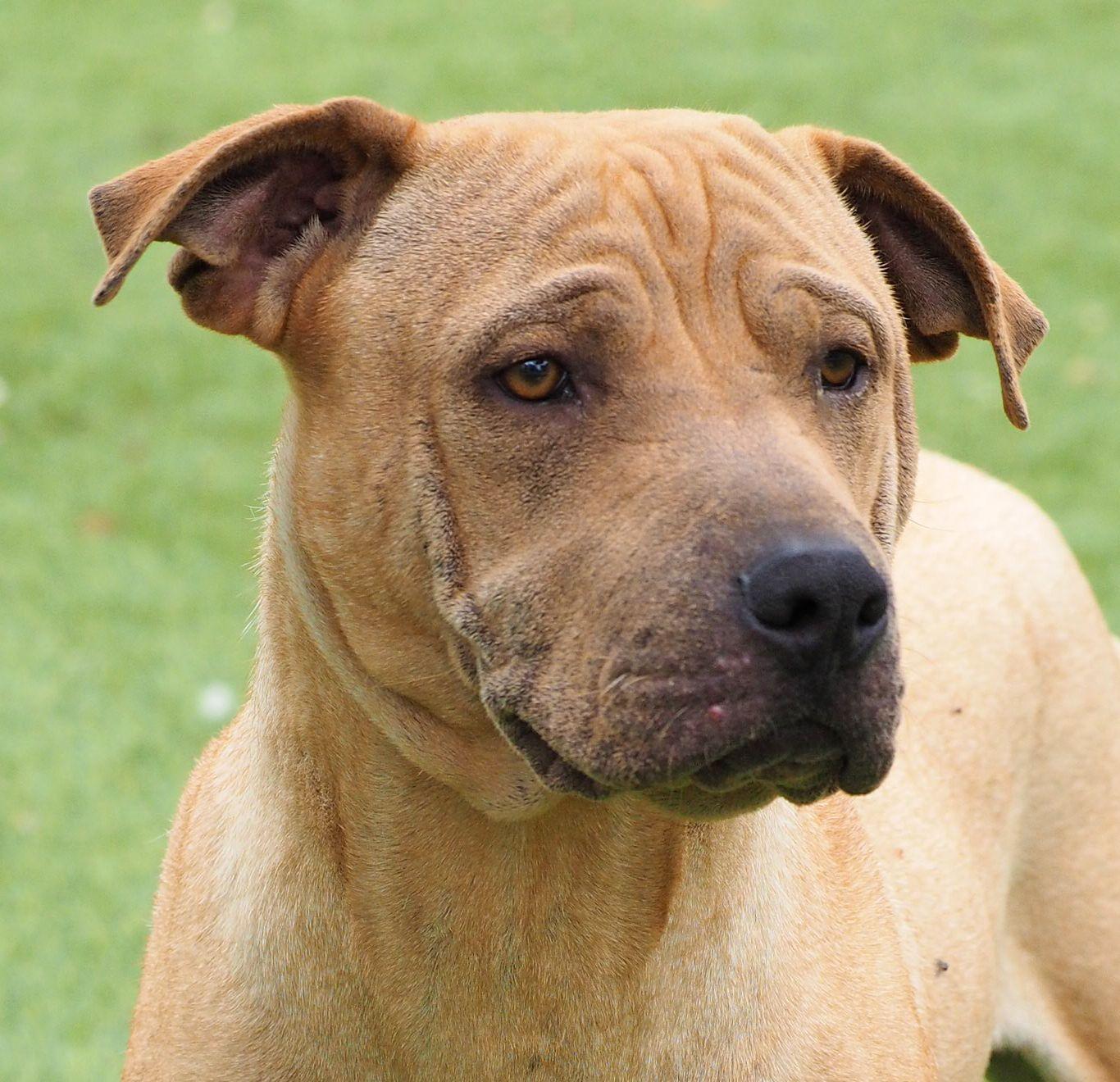 Kingston Ontario Humane Society Dogs For Adoption
