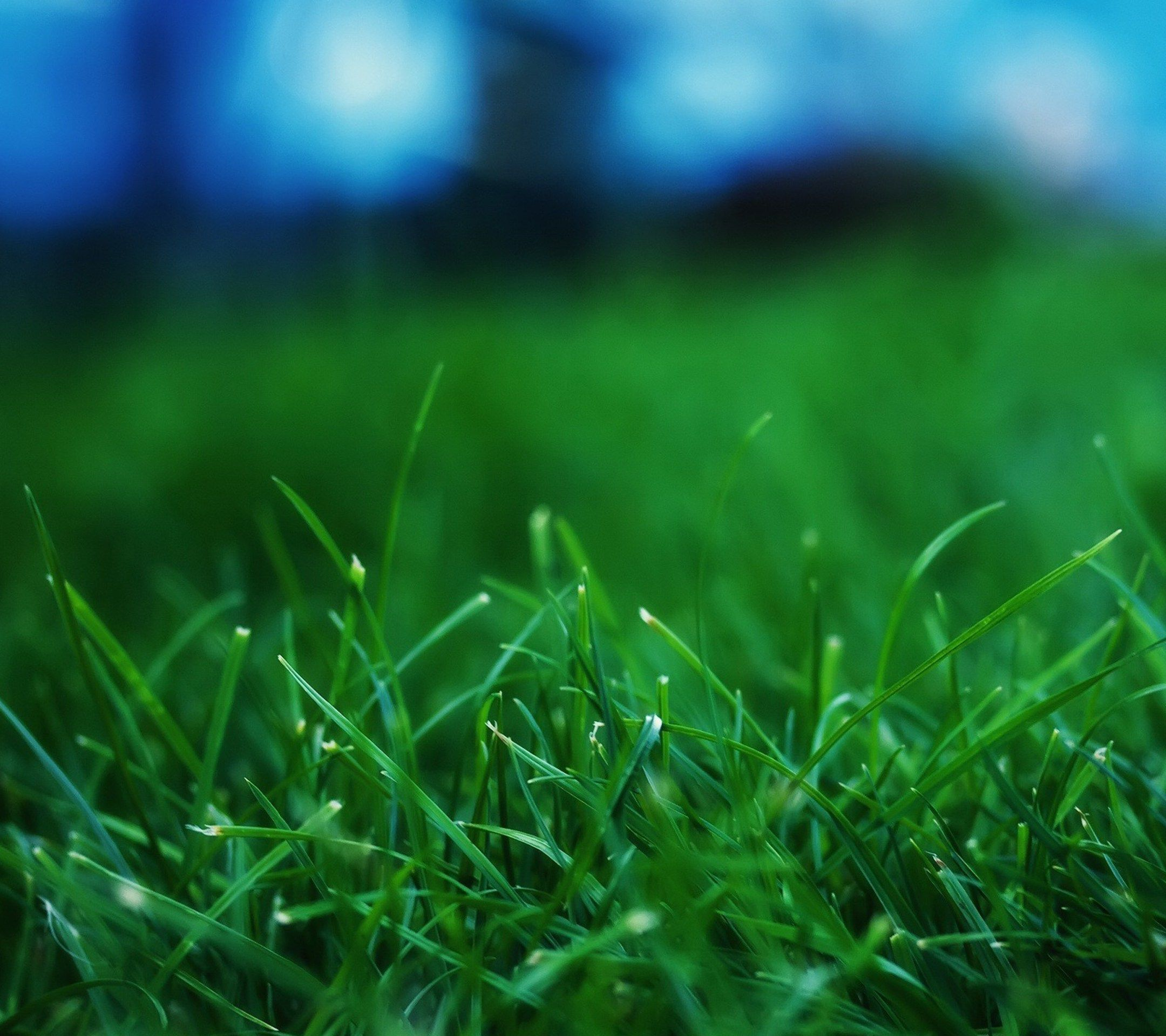 Grass Wallpaper, Best Nature