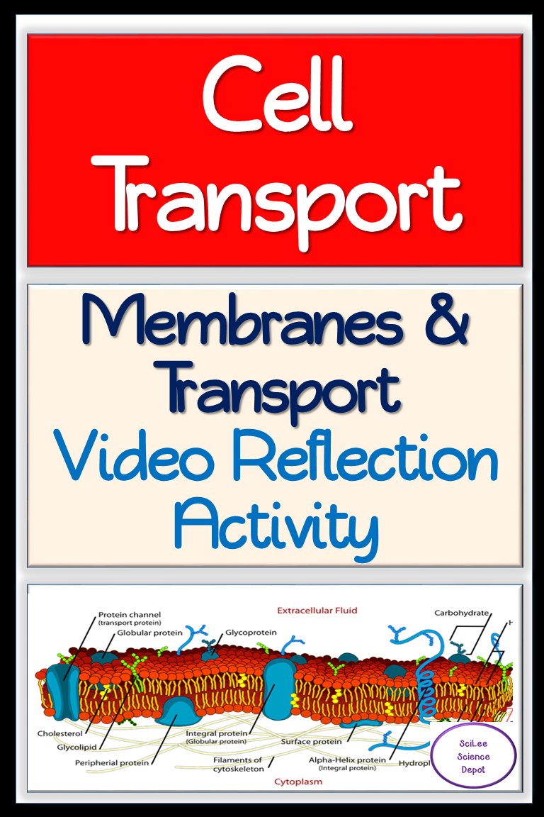 Cell Membranes Transport Video Reflection Activity Reflection Activities High School Science Activities Cell Membrane Transport [ 1152 x 768 Pixel ]