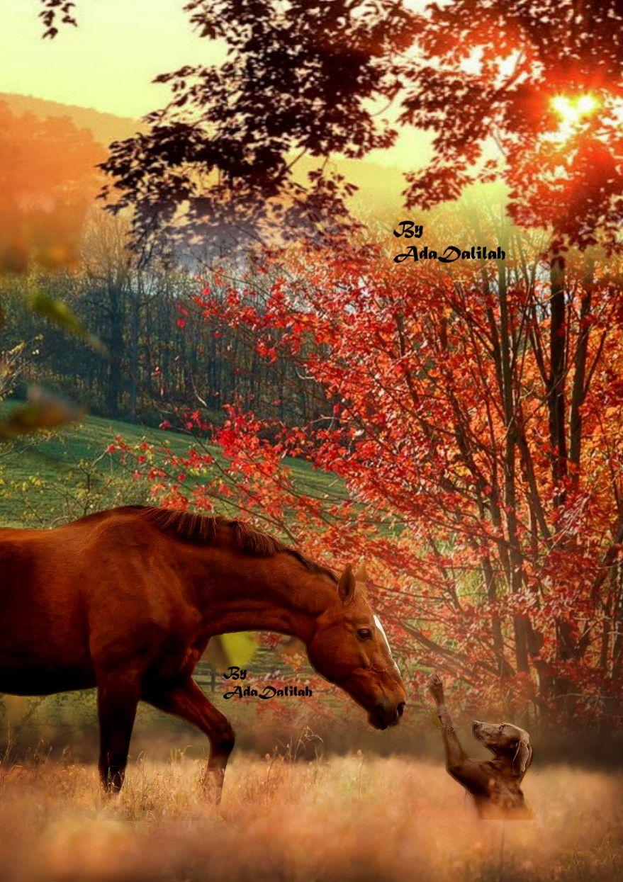 Horse Horses Horses And Dogs Horses Beautiful Horses