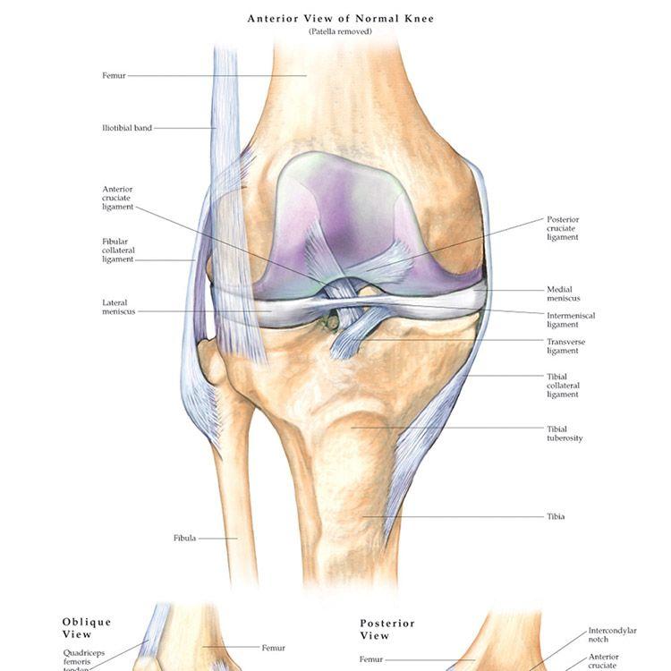 Knee Injuries Anatomical Chart | Knee injury and Knee pain