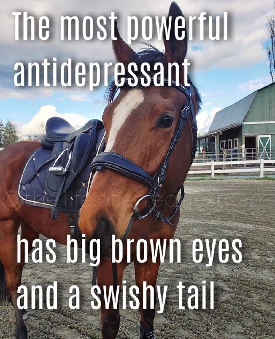 Equestrian Quotes On Instagram I Have To Make More Quotes Oops Sdequus Q Equestrian Quotes Horse Lover Quote Inspirational Horse Quotes