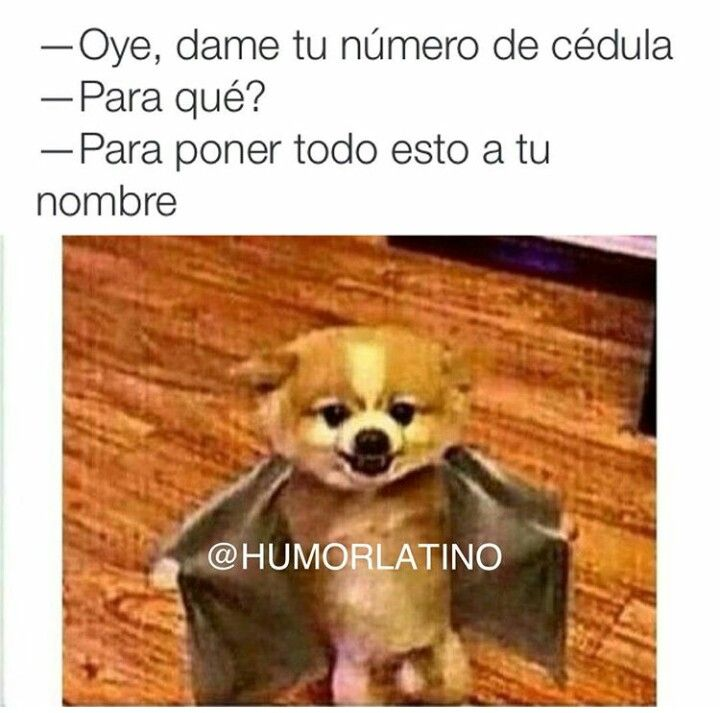 Si Te Piden La Cedula Ponte Pilas Funny Pictures Funny Animals Funny