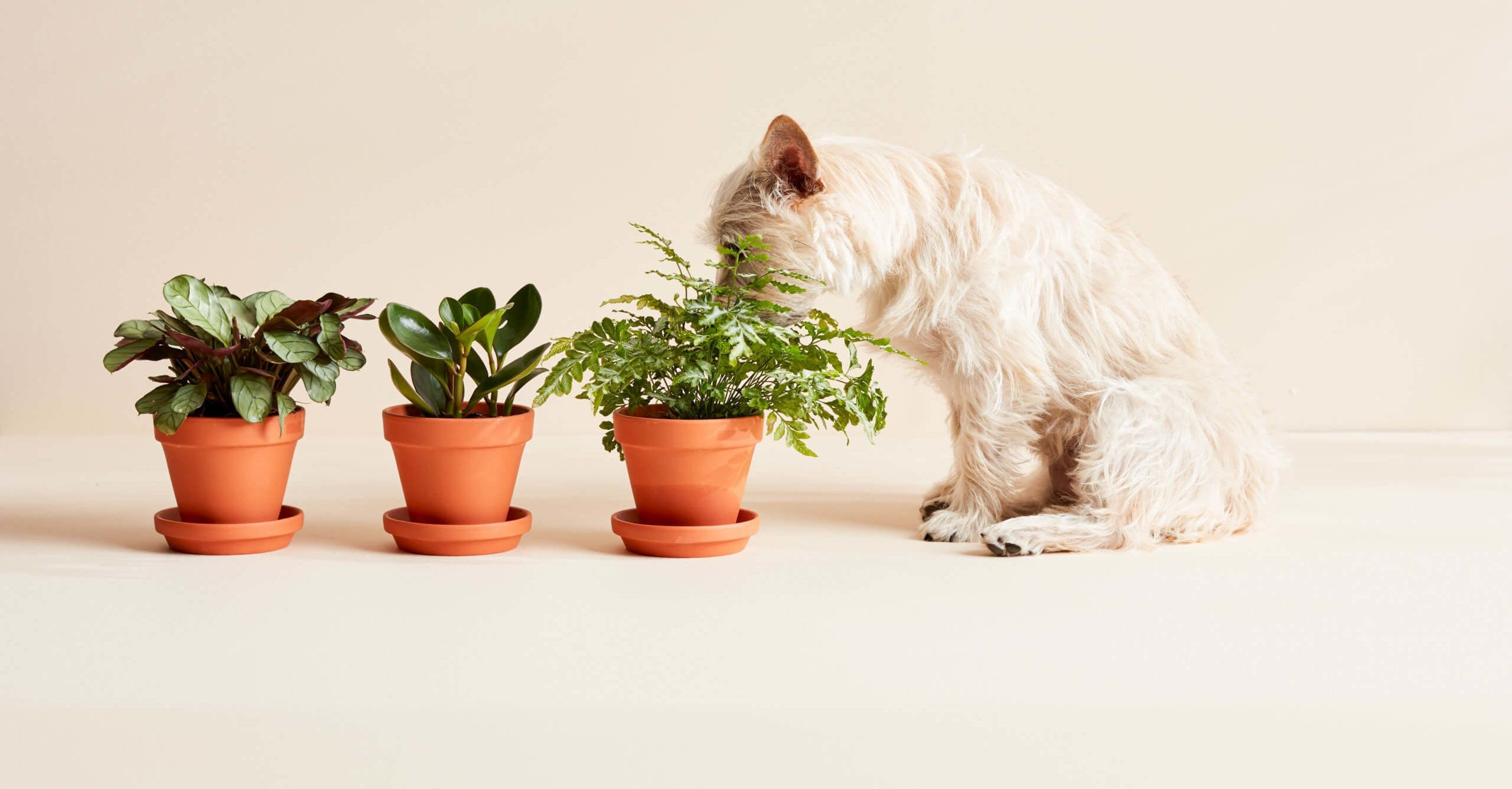 10 Best Non Toxic Houseplants That Are Safe For Children Cats Dogs My Tasteful Space Safe House Plants Plants Pet Friendly House Plants Indoor