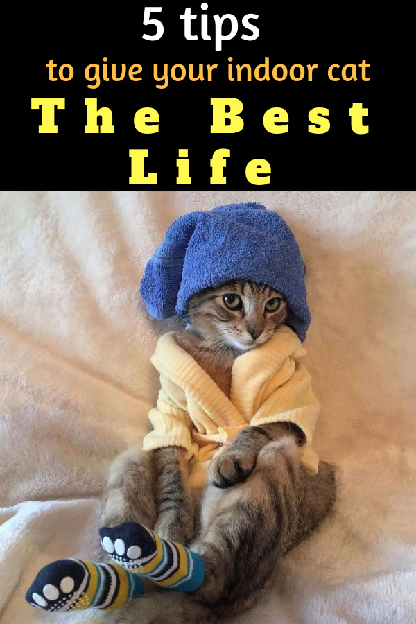 This Is How To Keep Your Indoor Cat Happy Healthy And Entertained Indoor Cat Cat Care Spoiled Cats