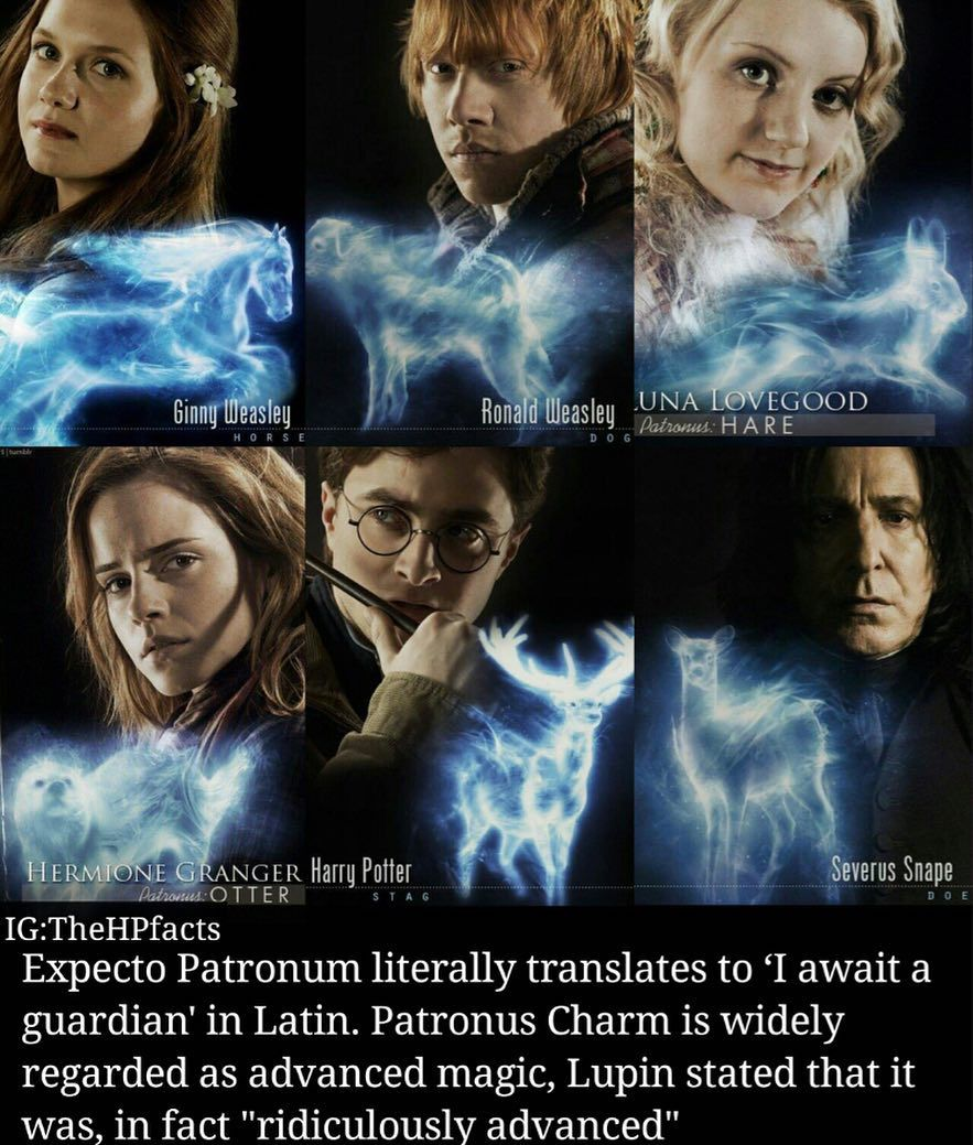 Harry Potter Fan Page On Instagram What S Your Patronus Charm Comment Below Follow Me Wizardpost S If You Aren