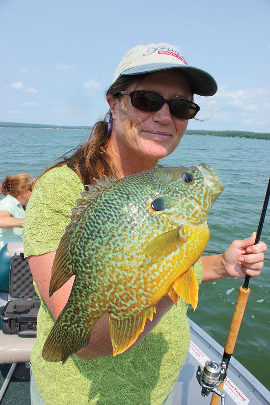 Top 5 lures and rigs to catch trophy pumpkinseed bluegill for Rock bass fish