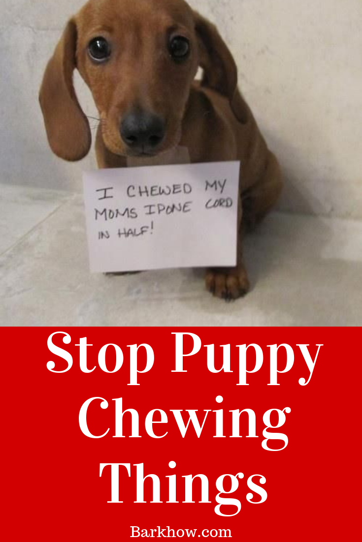 Stop Puppy Chewing Things Puppy Chewing Puppies Getting A Puppy
