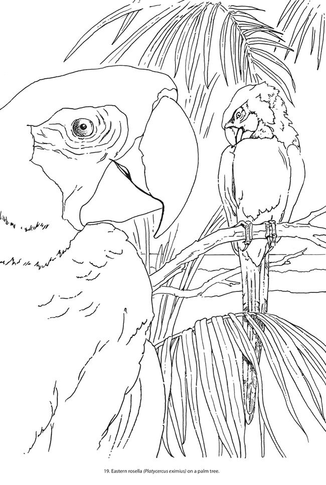 Creative Haven Beautiful Birds Coloring Book SAMPLE PAGE 3 Welcome To Dover Publications