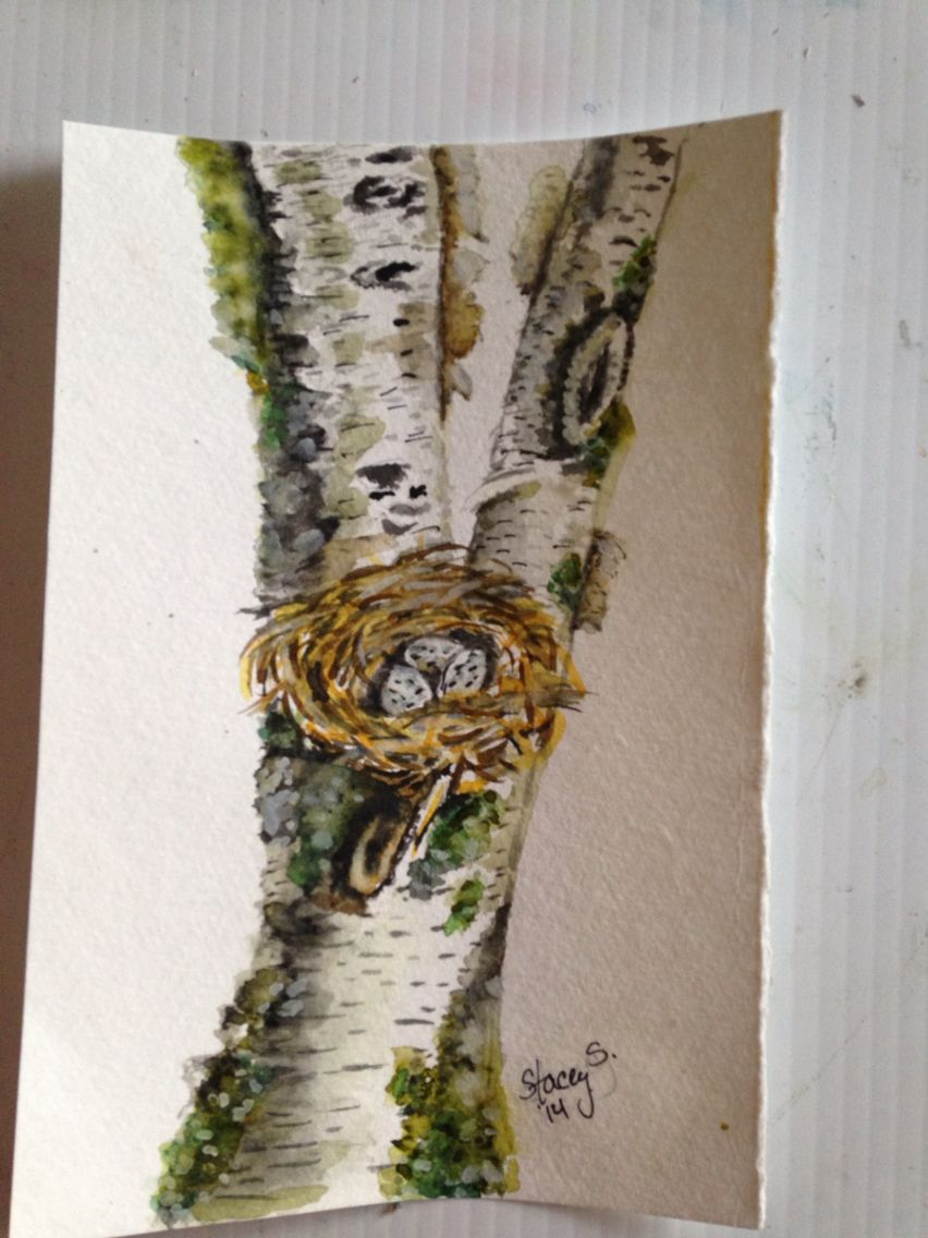 Birch tree with nest watercolor
