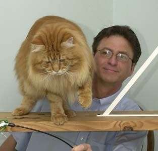 I want a Maine Coon Cat!