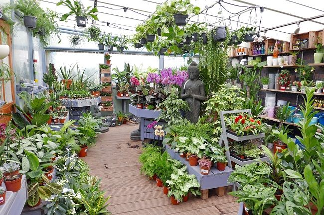 The Boma Garden Centre Kentish Town