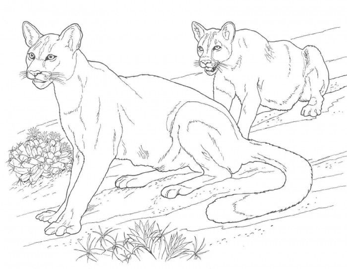 Black And White Lion Coloring Pages Printable Coloring Sheet