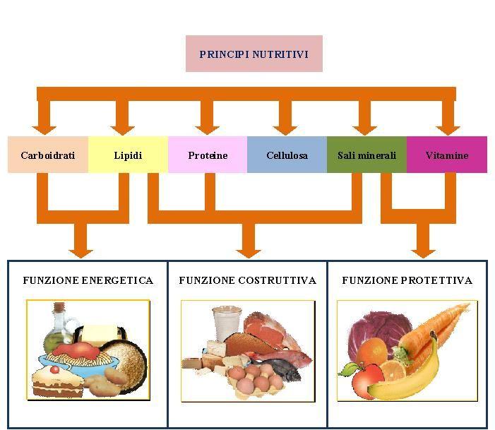 Pin Di Euroclinix Italia Su Scienze Alimenti Scuola Numeri Ordinali