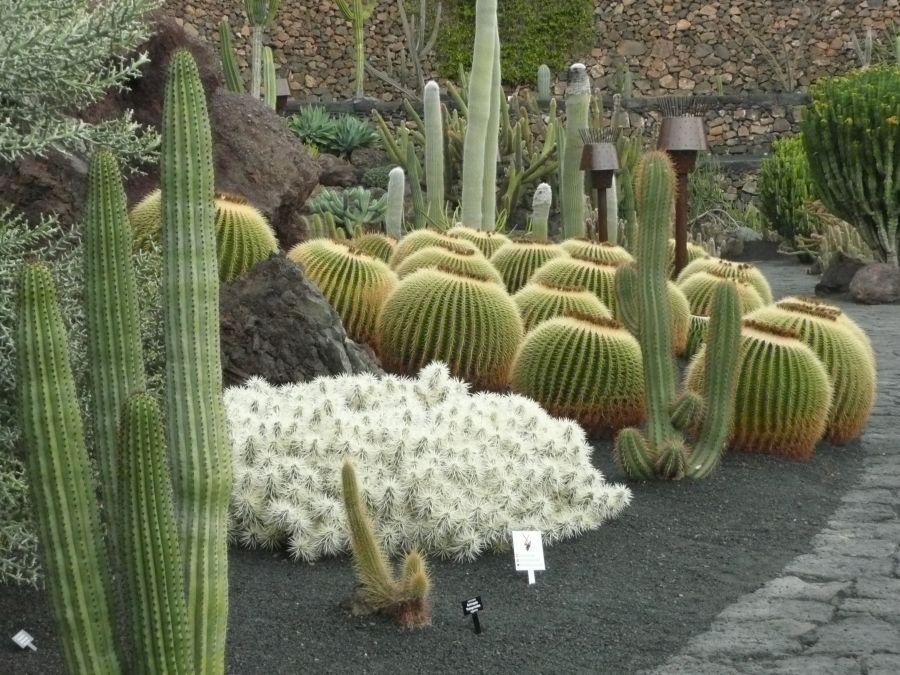 jardin de cactus de lanzarote - Jardn De Cactus