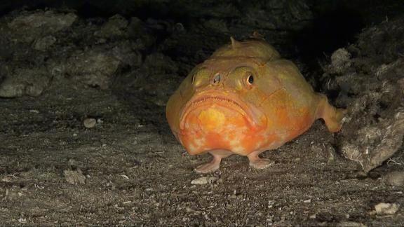 A Pink Frogmouth Weird Animals Weird Fish Fish Pet