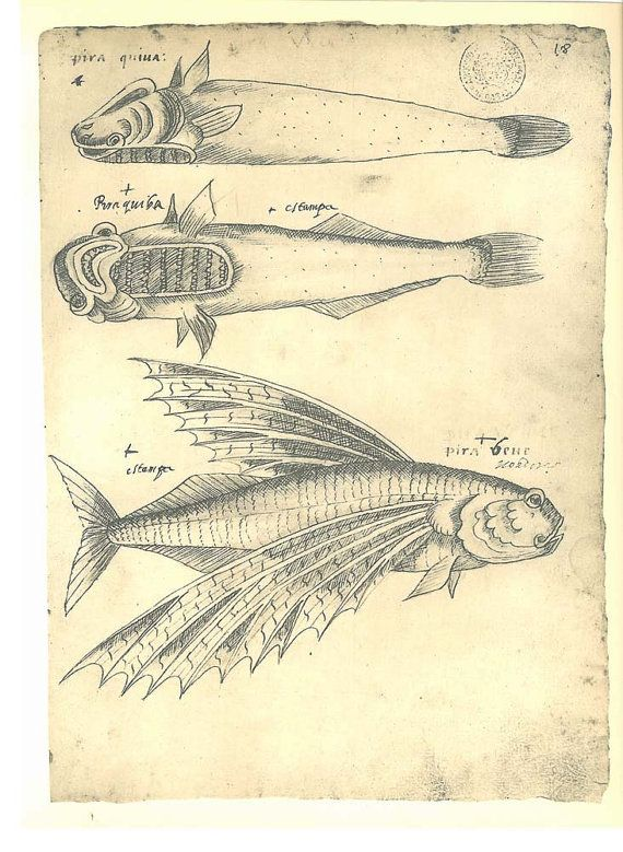 Fishes Sketch Drawing Vintage Facsimile by CarambasVintage on Etsy ...