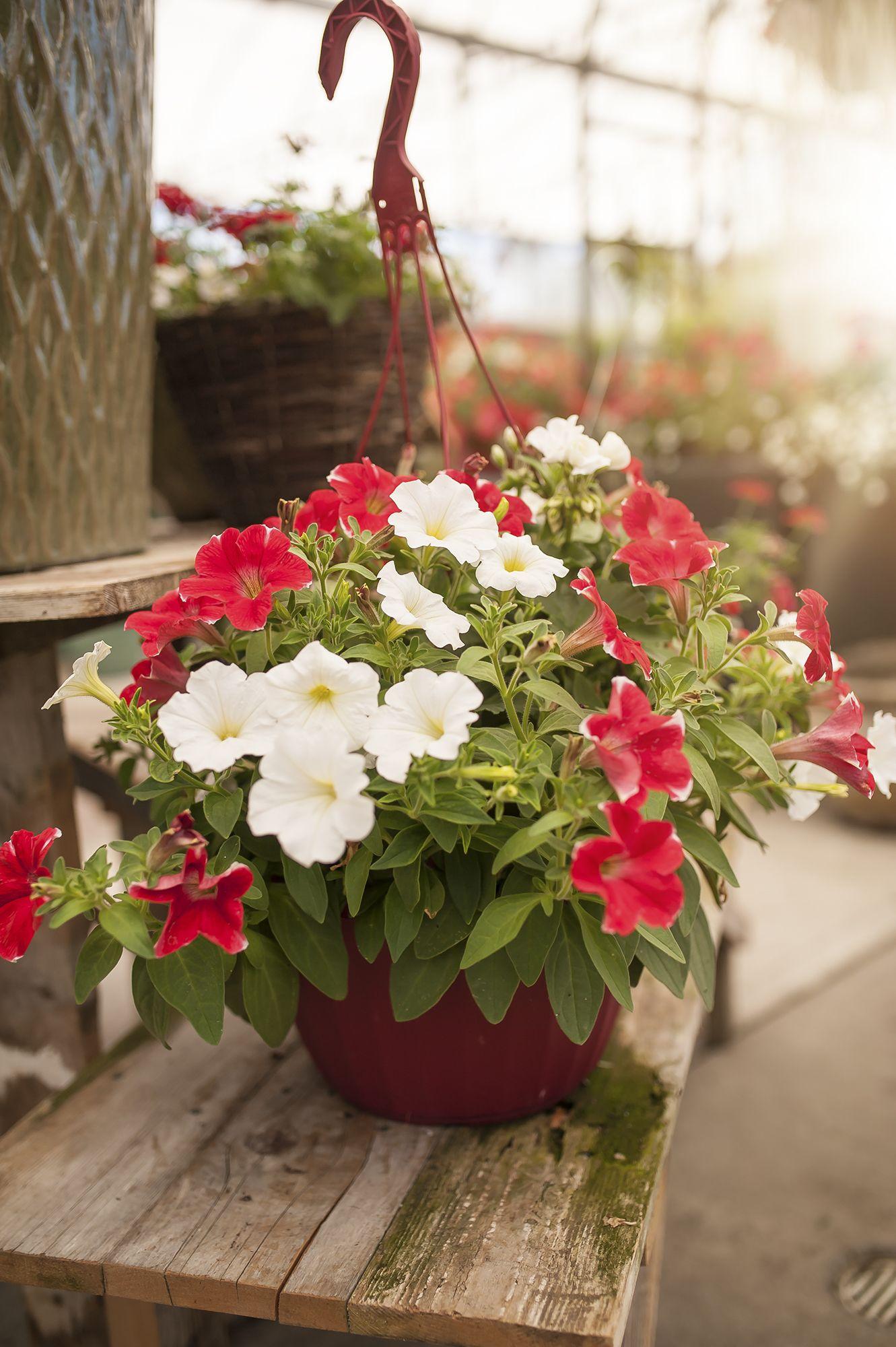 HAPPY 150th CANADA!!! Garden, Indoor plants, Hanging baskets