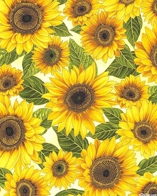 Falling For You Sunflower Enlightenment Cream Gold Sunflower Painting Sunflower Wallpaper Sunflower Iphone Wallpaper