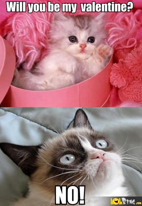 grumpy cat/valentines day pics 7f4etumblr