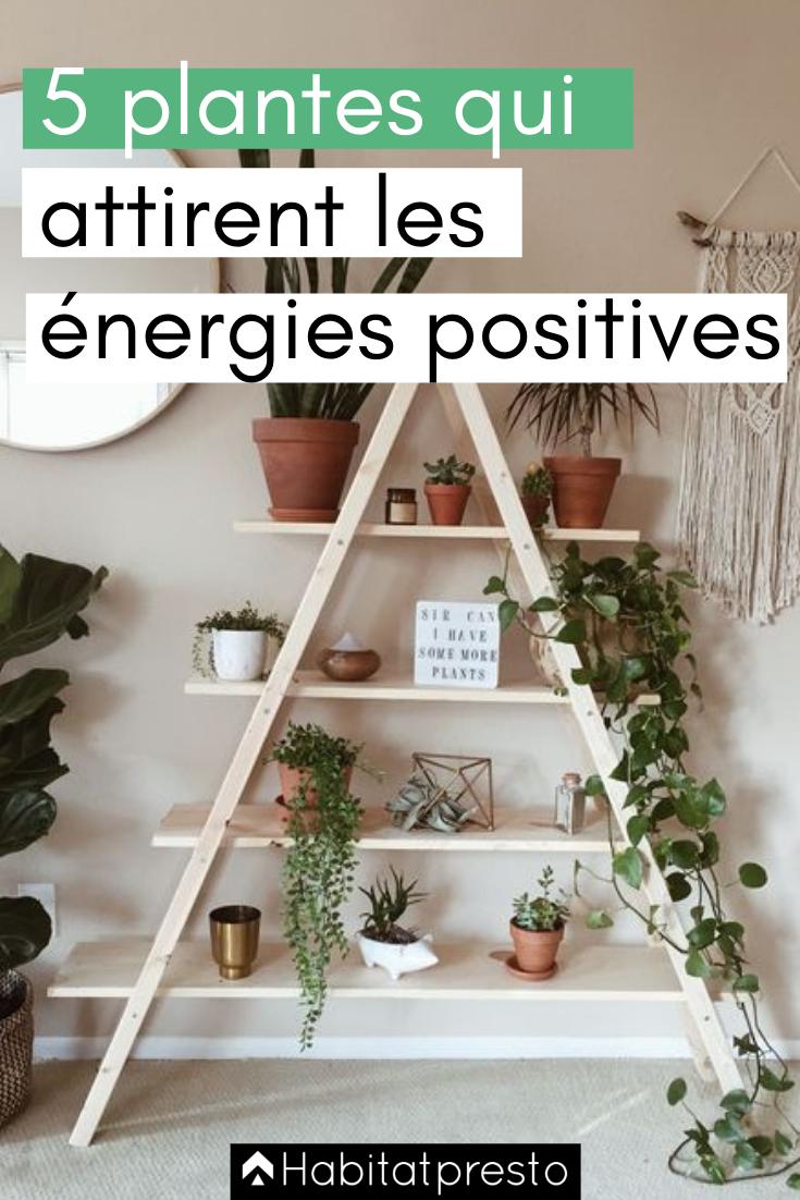 5 plantes qui attirent les énergies positives chez vous