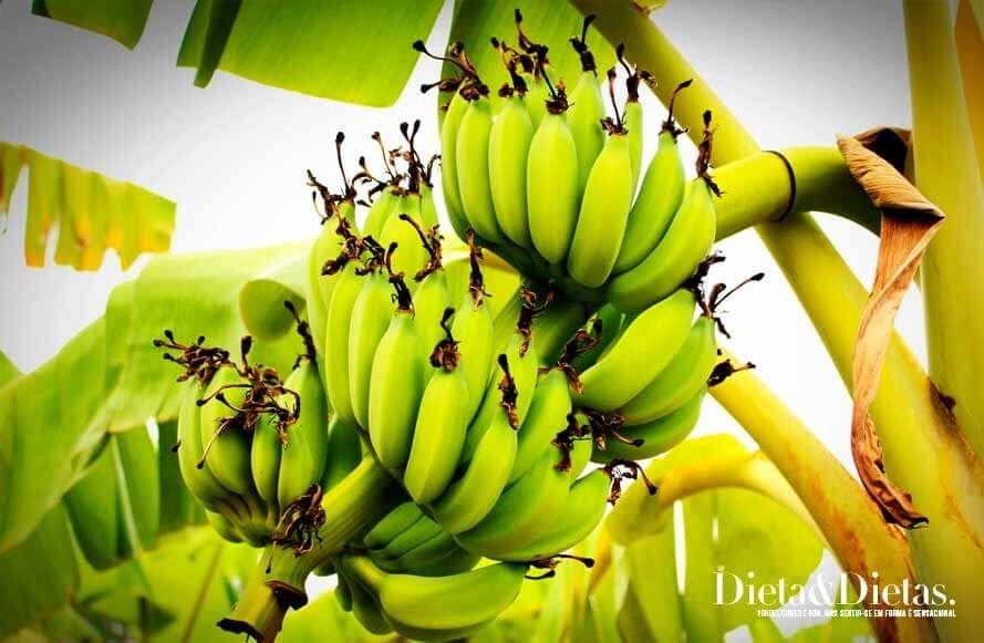 Biomassa Da Banana Verde Guia Definitivo Como Fazer E