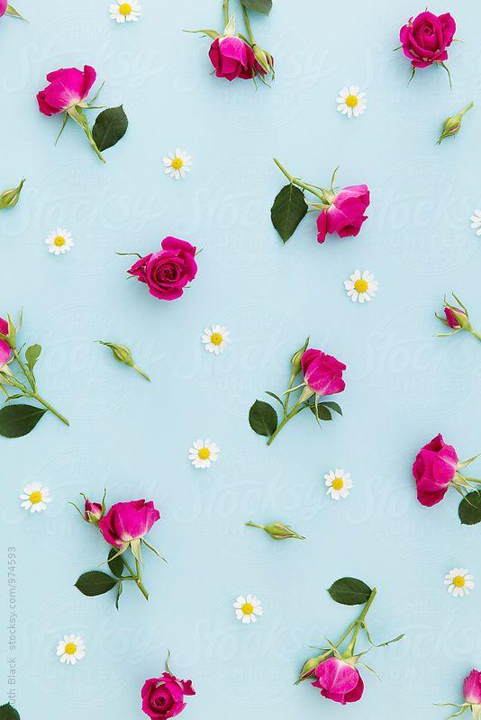 Summer Flower Background By Ruth Black Background Flower Stocksy United Flower Phone Wallpaper Flower Wallpaper Flower Iphone Wallpaper