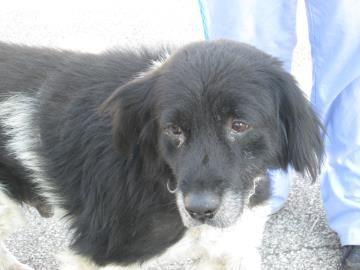 Xavier Adoptable Dog At The Ashtabula County Apl Ashtabula Ohio I Saw This Baby At The Shelter Last Week A Animal Shelter Adoption Dog Adoption Pet Life