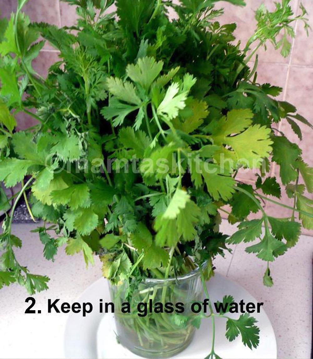 Coriander cilantro leaves how to preserve them