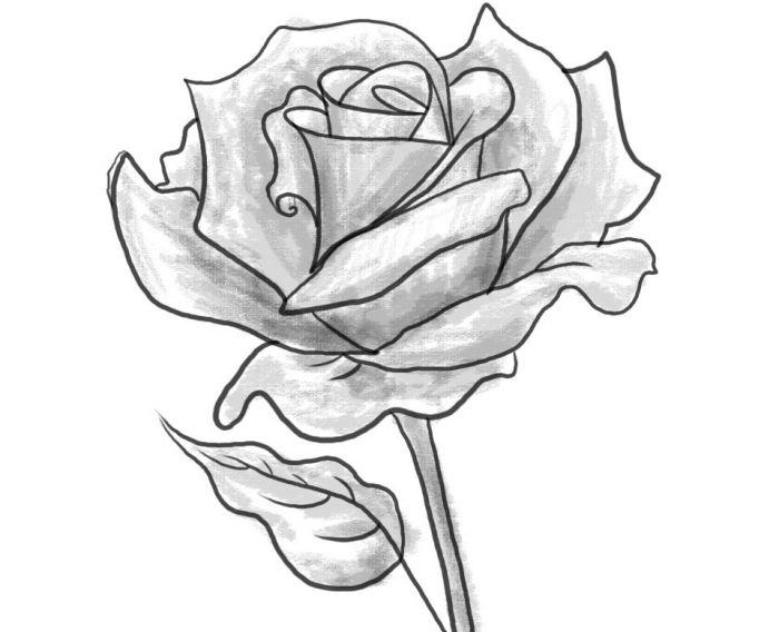 1001 mod les et conseils pour apprendre comment dessiner une rose illustrations dessin - Dessin facile rose ...