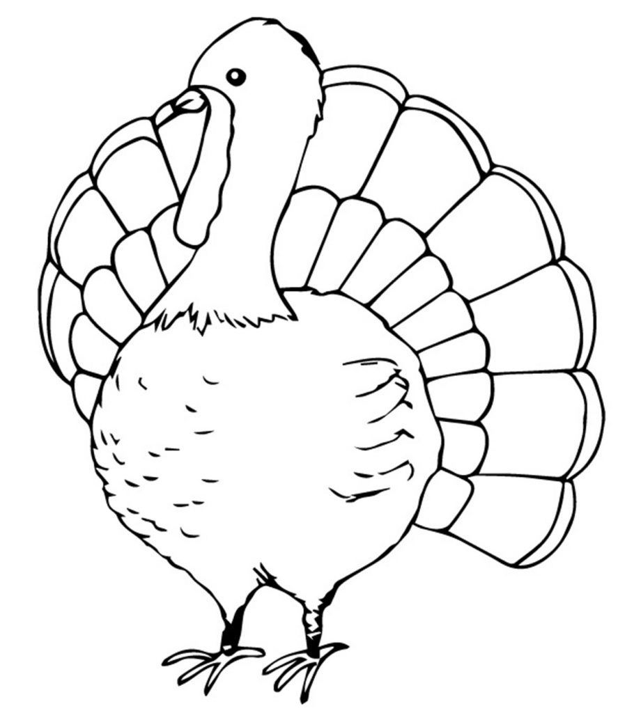 Top 25 Turkey Coloring Pages For Toddlers coloringsheets