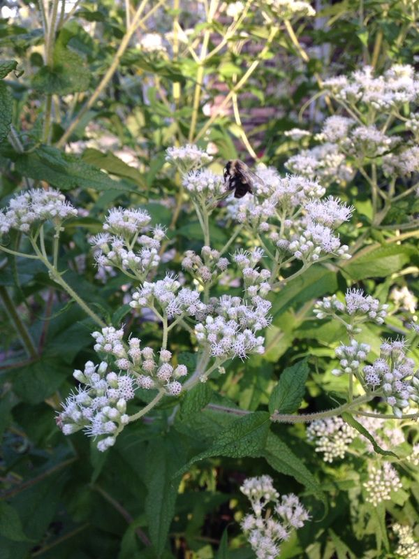 Free Plant Identification Wild Flowers Plants Beneficial Insects