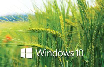 Windows 10 Wallpapers 29 – [2560 x 1440] 4K