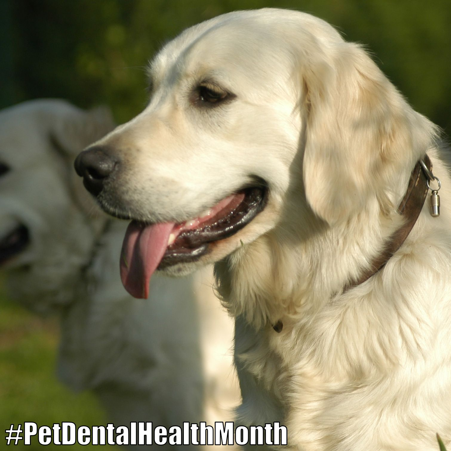 Bacteria Plaque Forming Foods Can Cause Build Up On A Dog S