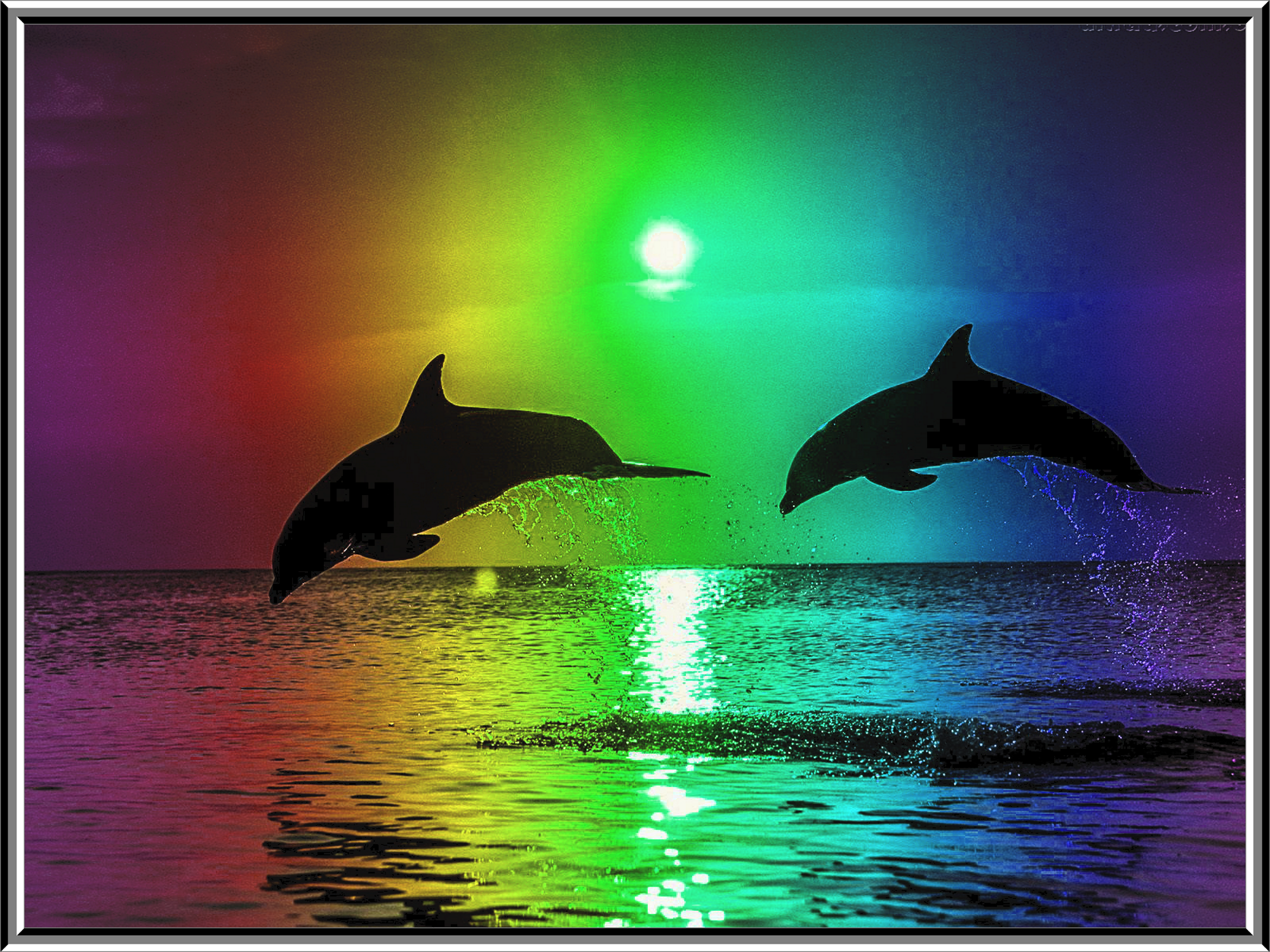 Leaping Dolphins in the Rainbow Colored Moonlight. | Colors of the ...