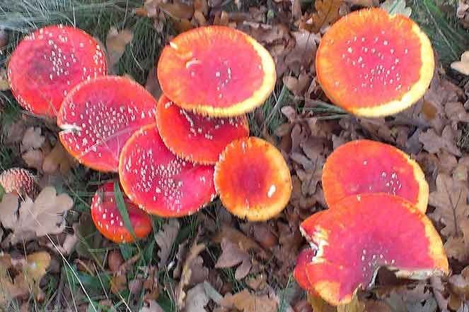Ingezonden foto: De herfst is weer begonnen