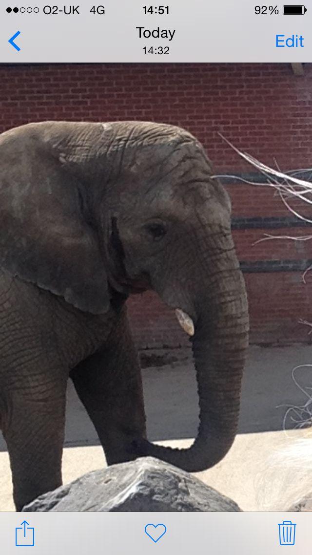 Love elephants big and gentle