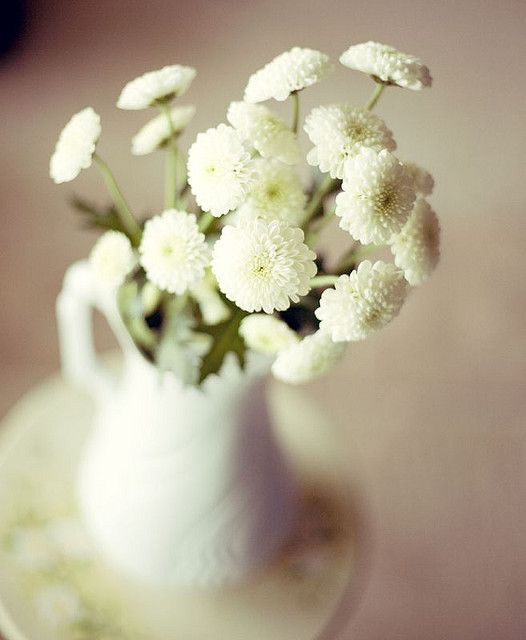 106365 Floral Loveliness Pinterest Flowers White Mums And