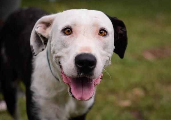 Tia Is A Happy Go Lucky Kind Of Gal Looking For A Home To Call Her Own Is It Yours Meet Tia In Townsville Today Http Bit Ly 2 With Images Animals Adoption Townsville
