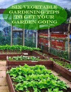 Pin By Samantha On Gardening Garden Flora Garden Plants