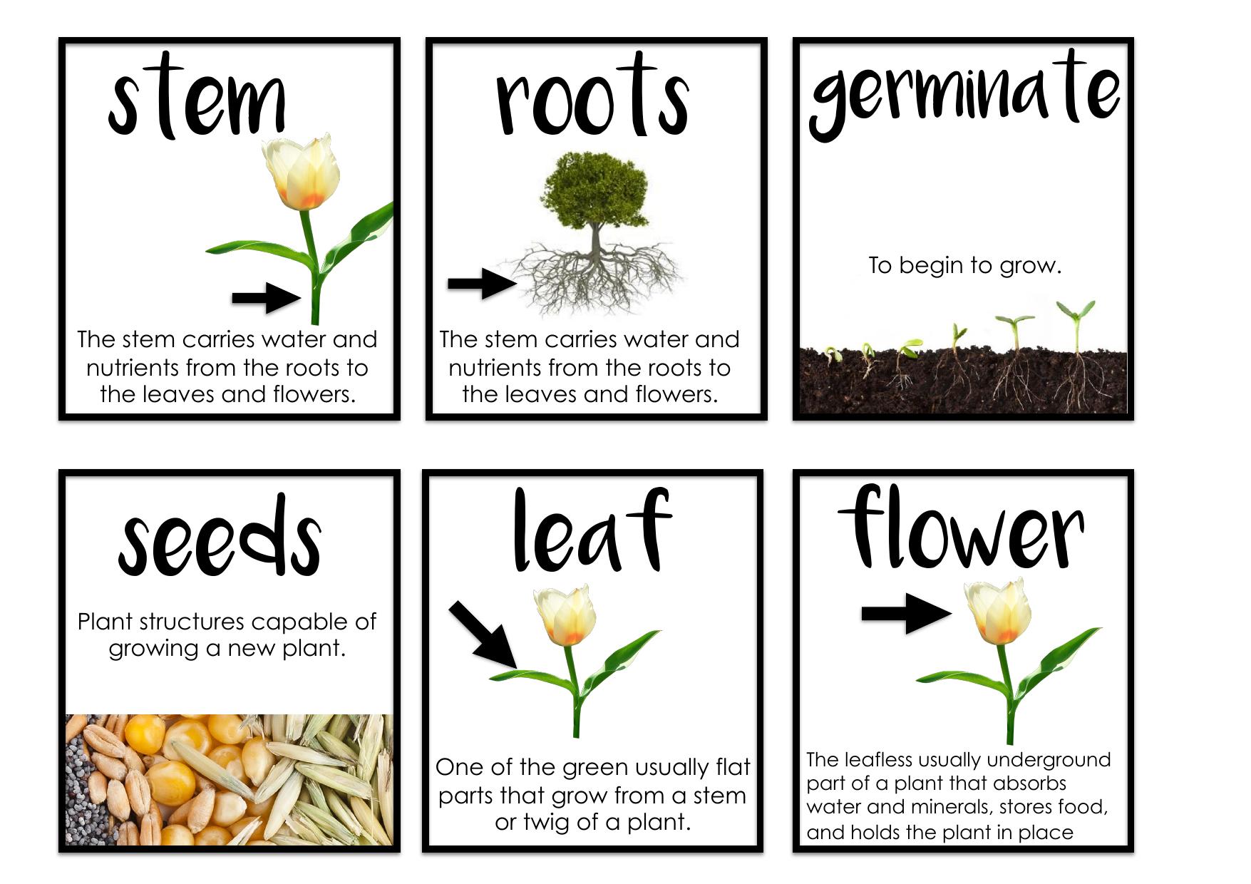 Needs Of Plants And Animals Vocab