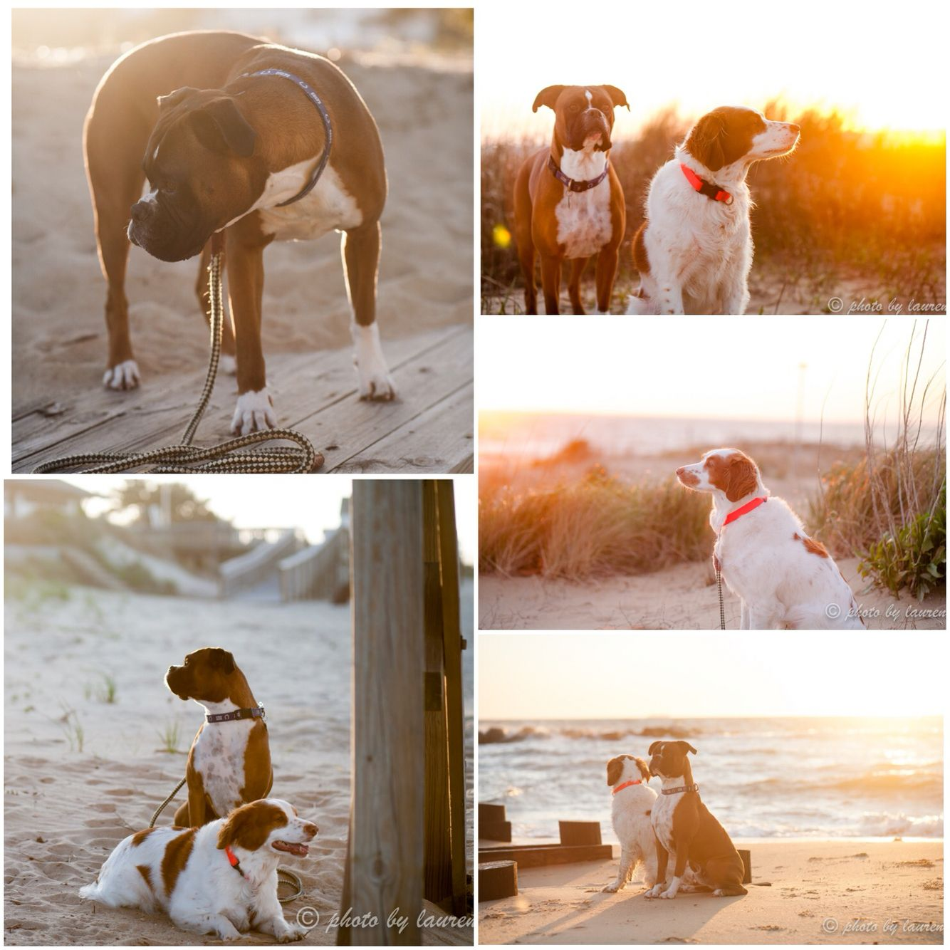 Sunset to sunrise! A little pet photography here at Ocean View Beach Park in Norfolk, VA. This spot would be perfect for family photography or some engagement photos!