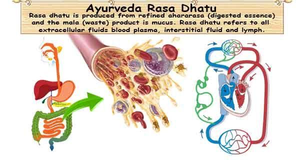 Rasa dhatu refers to plasma or non-cellular portion of the