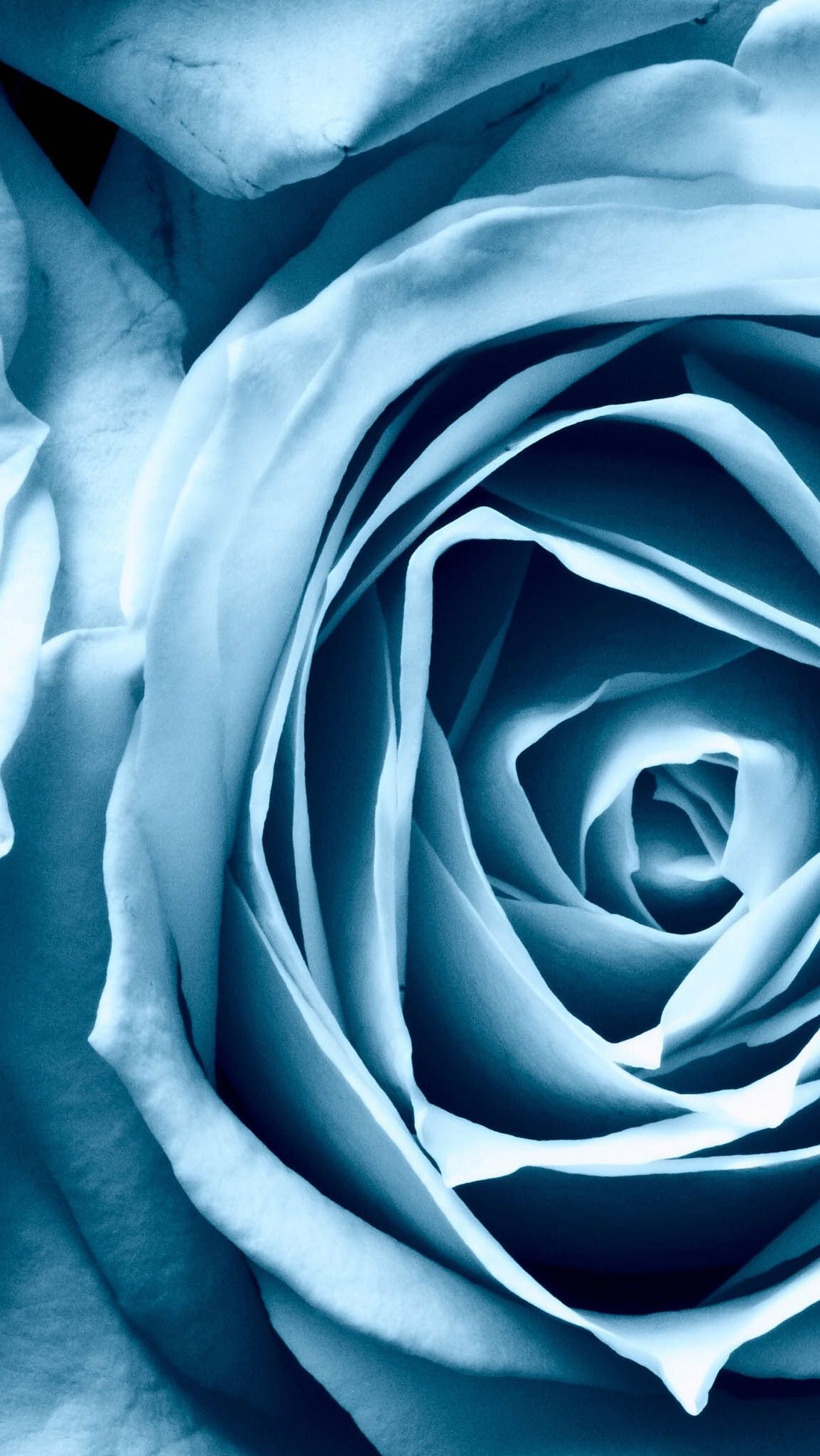 Pin by Glediola Alija on Flowers Baby blue iphone