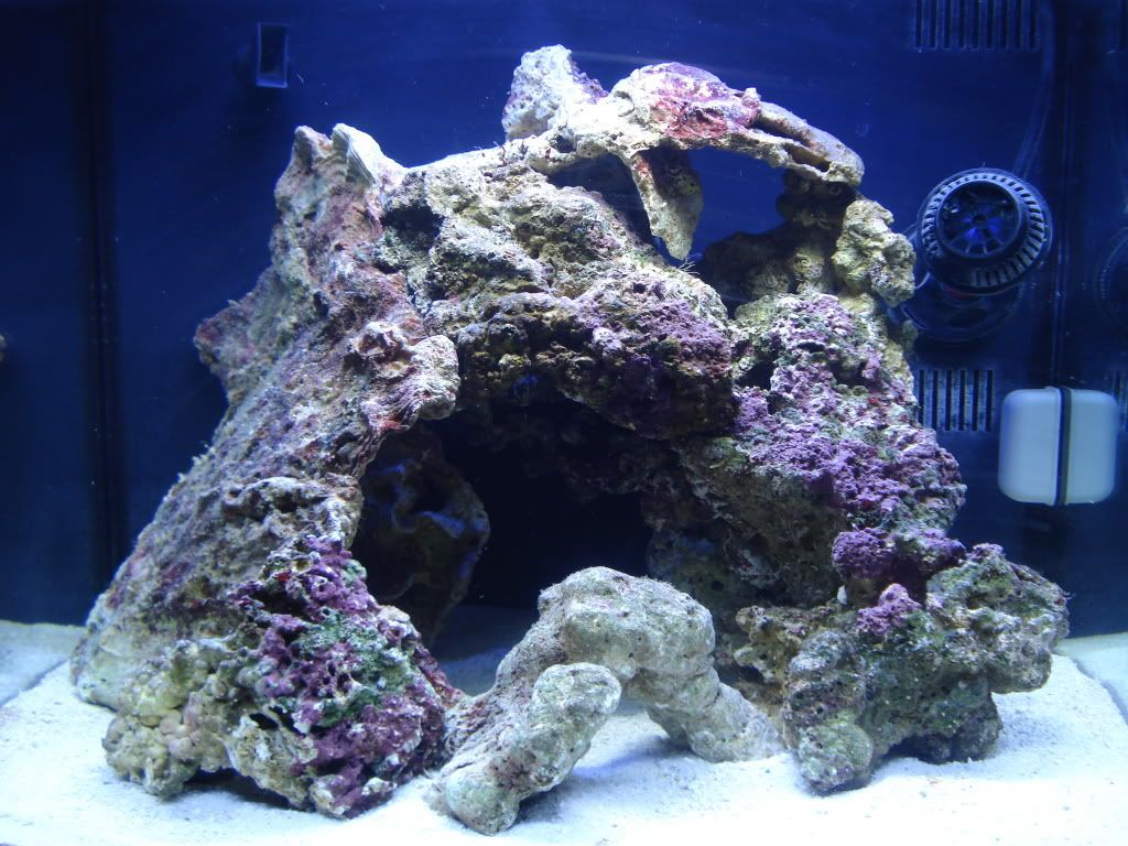 Different Types Of Live Rock Aquascape   Google Search