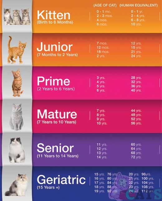 How Old Is My Cat In Cat Years Cat Age Calculator And Chart Cat Ages Cat Years Cat Age Chart